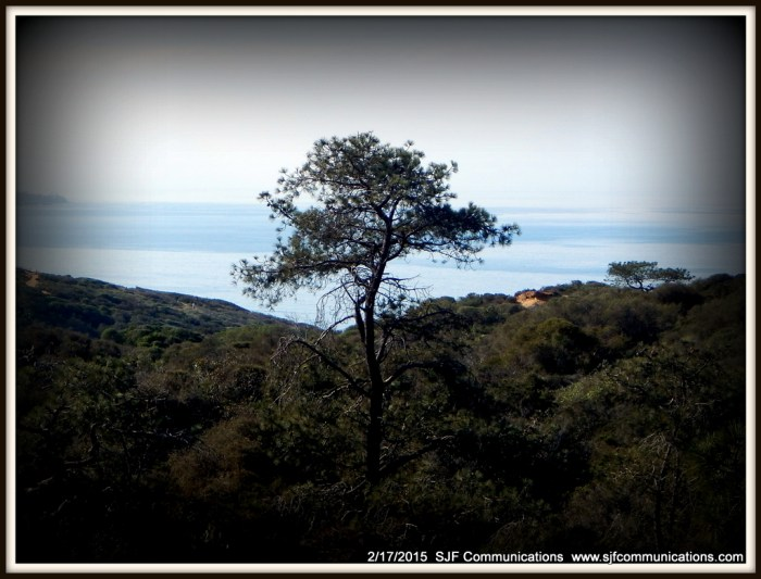 Lone Tree at Torrey Pines State Reserve
