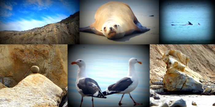 Collage at Torrey Pines State Beach  3.17.15