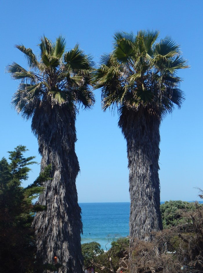 Palm Trees Del Mar