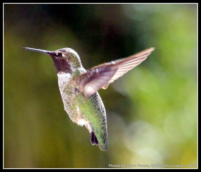 hummer16.fly