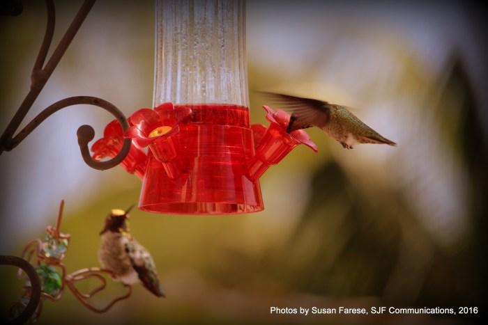 hummingalong