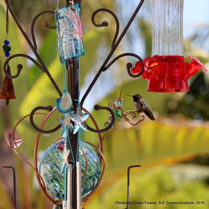 spotthebird