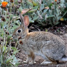 Bunny at Balboa Park, Photos by SJF Communications