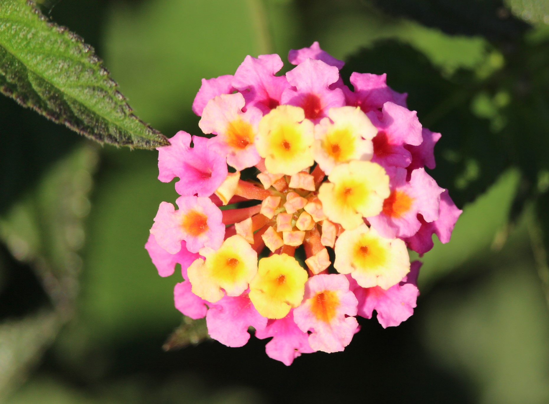 flower.IMG_5806