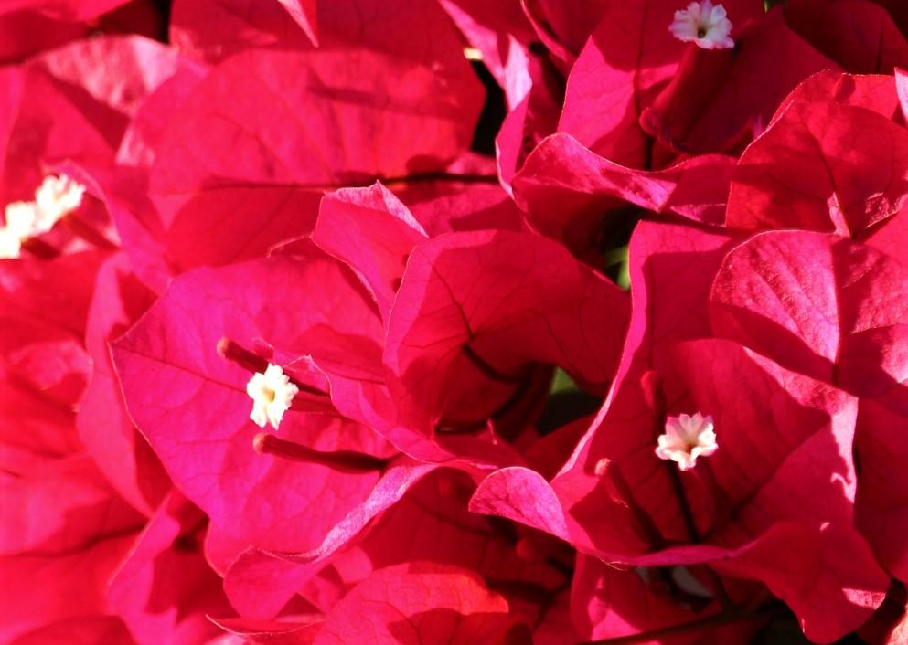 flowers.IMG_5823