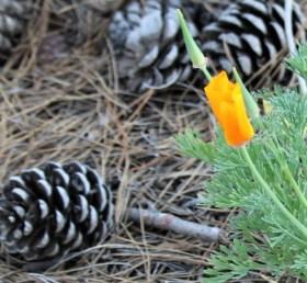 pineconesandflower.IMG_0283
