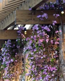 purple.IMG_1594