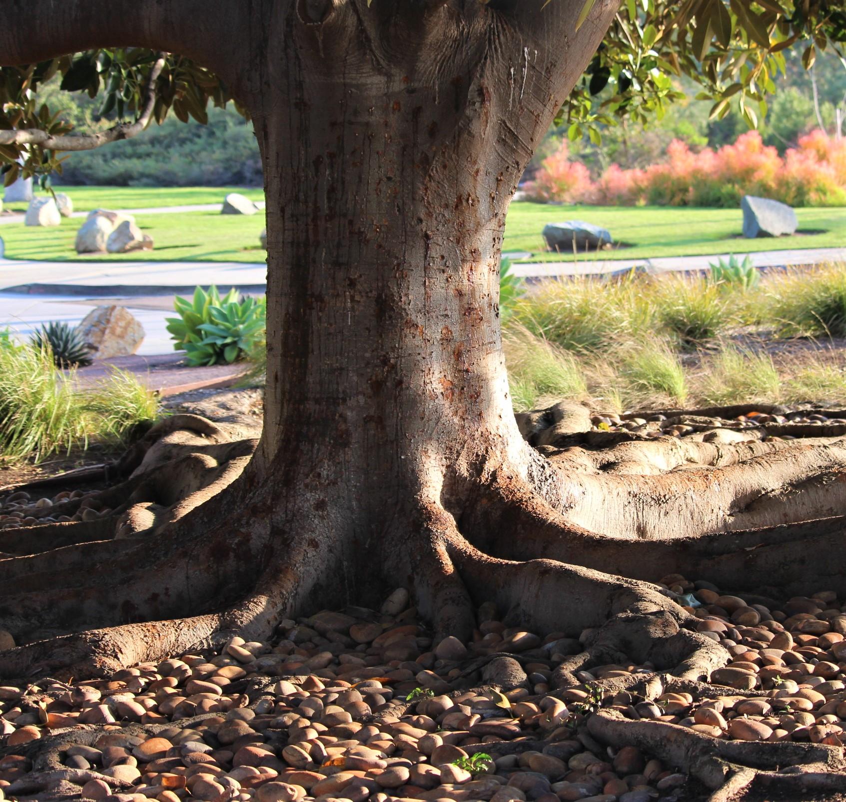 tree.IMG_5819
