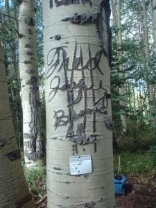 Arborglyph Pine Piedra Stockdriveway