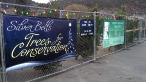 Silver Bells Christmas Trees
