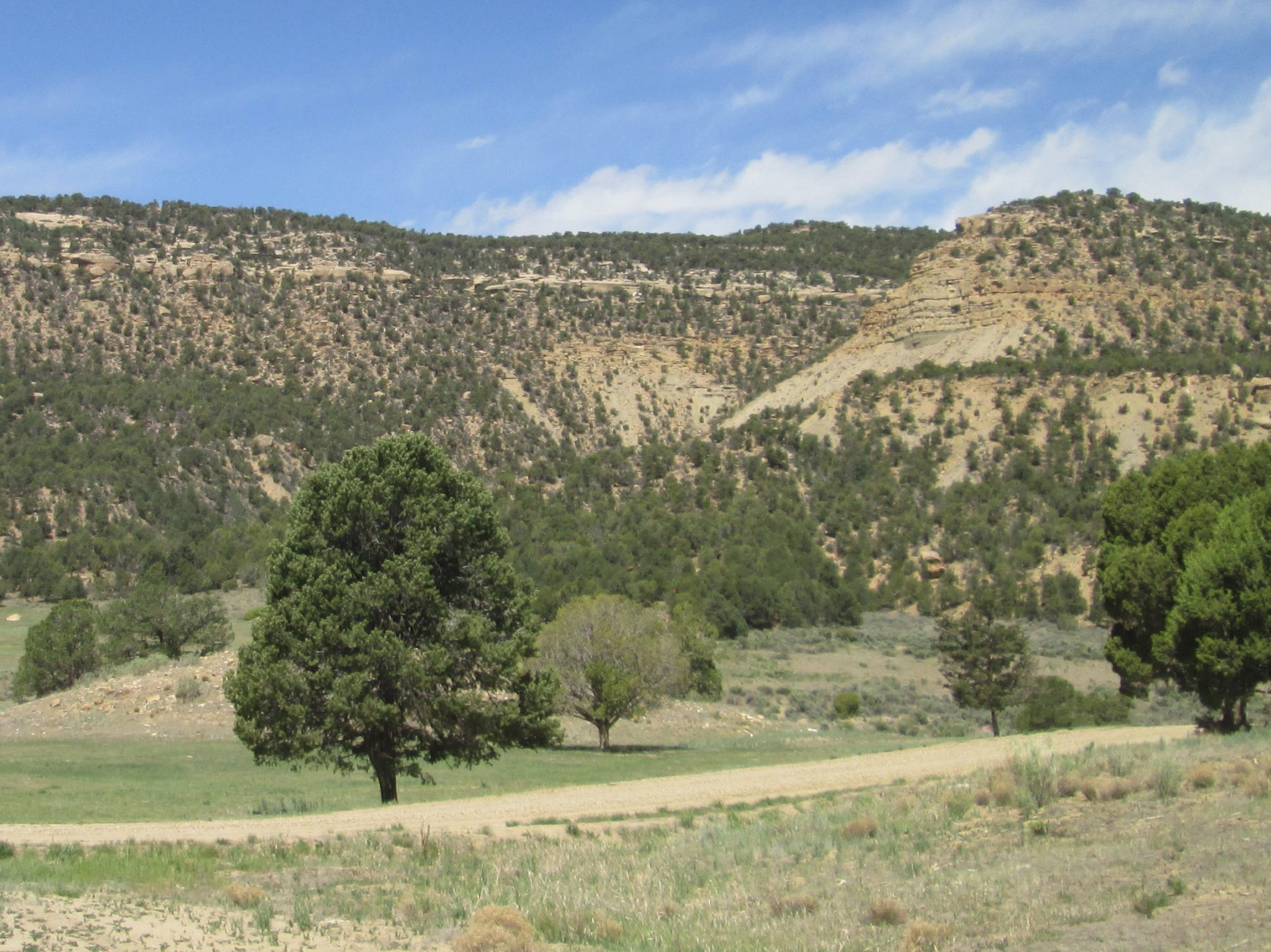 Menefee Mountain and Weber Mountain Wilderness Study Areas