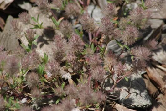 Fluffy Plant in my yard