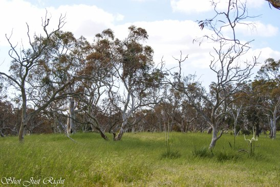 Great bush area in Kingston SE South Australia