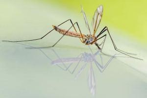 backyard mosquitoes