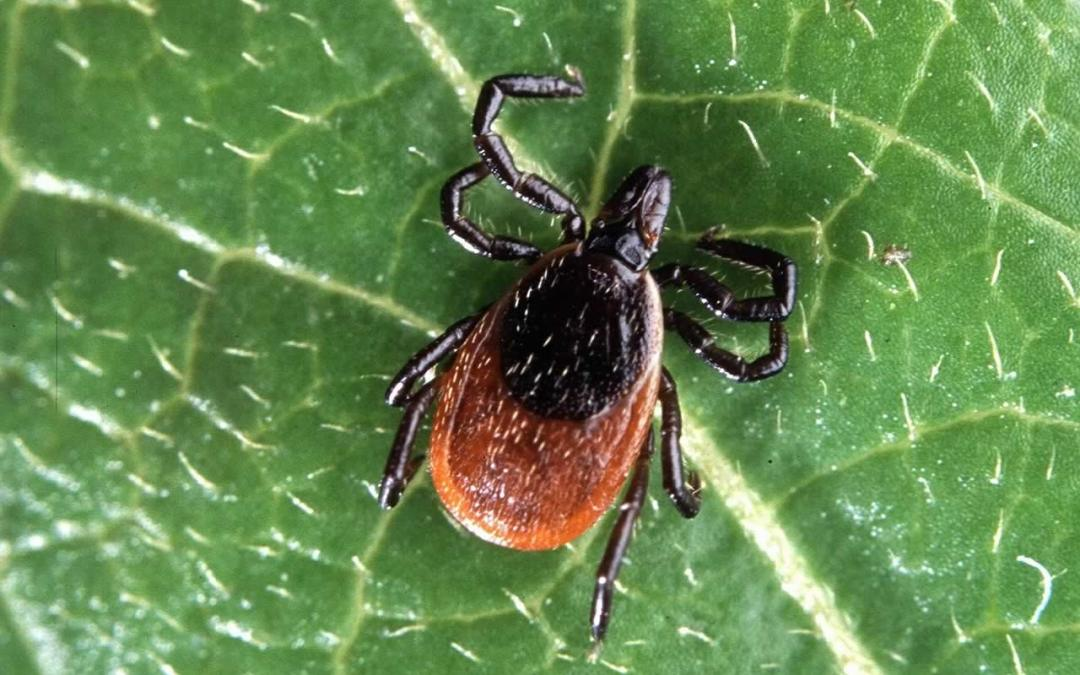 Lyme Disease is Serious and Can Kill