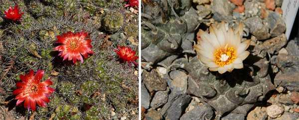 Цветы с маленькими цветочками – названия и фото, описание ...