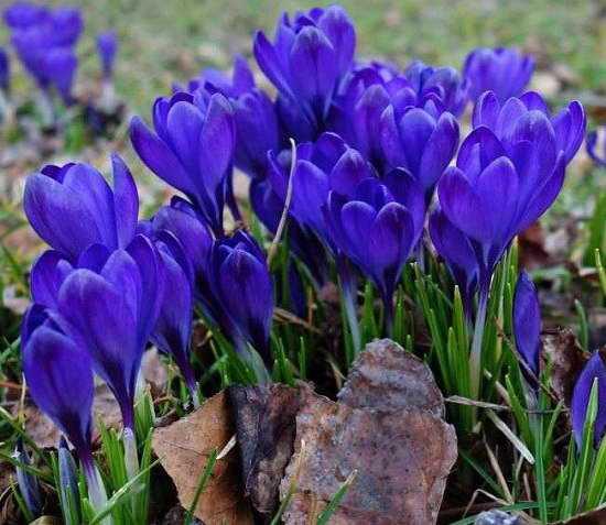 Голубые цветы для клумбы названия и фото – 20 голубых ...