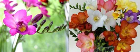 Какие есть цветы названия и фото – названия и фото ...