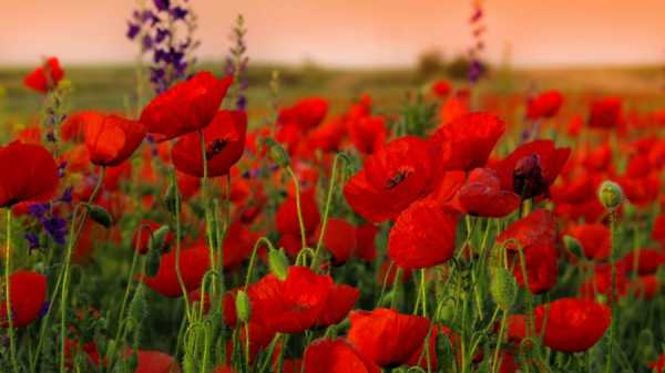 Красивые цветы многолетники название и фото – Каталог ...