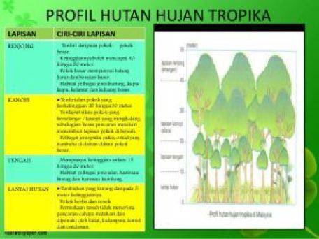 10 Resort Hutan Hujan Tropika Khazanah Negara Wajib Pergi