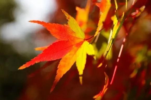 醍醐寺の紅葉2016のライトアップや見ごろの時期は?