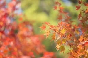 箱根の紅葉2017の見ごろ時期と穴場スポットはココ!