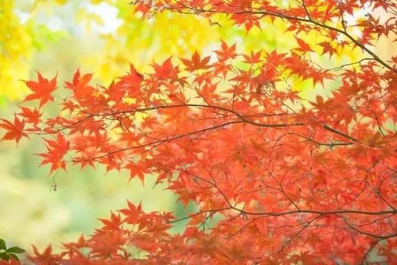 上高地の紅葉2017の見ごろ時期と紅葉の絶景スポットは?