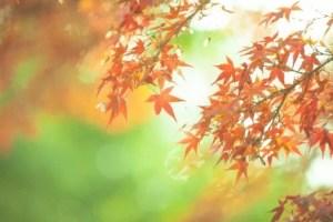 鬼怒川・塩原の紅葉2016の見ごろの時期と紅葉スポットはココ!
