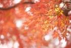清水寺の紅葉2018ライトアップや見ごろ時期と観光スポットはココ!