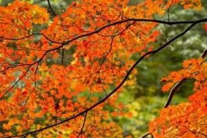 中禅寺湖の紅葉2017見ごろ時期とおススメの紅葉スポットはココ!