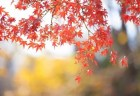 永観堂の紅葉2018のライトアップと見頃や東山の紅葉名所はココ!