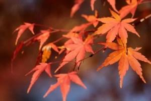 志賀高原の紅葉2018見頃とおススメの紅葉スポットはココ!