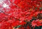 常寂光寺の紅葉2018の見ごろ時期とおすすめ紅葉スポットはココ!