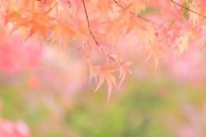 嵐山の紅葉2017見ごろの時期とライトアップや紅葉スポットはココ!