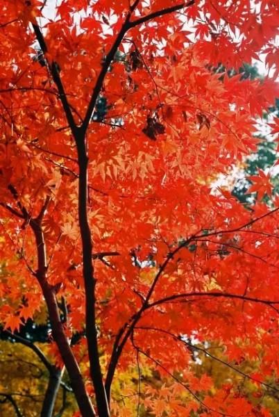 毘沙門堂の紅葉2018見ごろ時期と紅葉狩りスポットはココ!