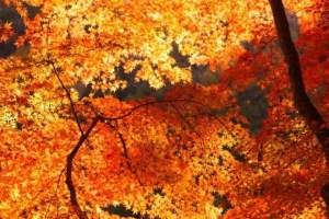 東福寺の紅葉2017見ごろ時期と紅葉狩りスポットはココ!