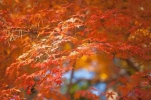 哲学の道の紅葉2016見ごろ時期と紅葉狩りコースはココ!