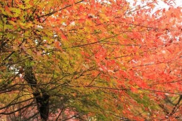 金閣寺の紅葉2016の見ごろ時期と穴場の紅葉スポットはココ!