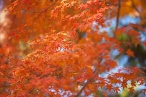 井の頭恩師公園の紅葉2016の見頃とデートスポットはココ!