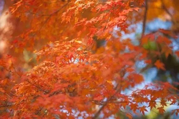 井の頭恩師公園の紅葉2017の見頃とデートスポットはココ!