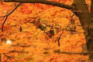 昭和記念公園の紅葉2017見ごろ時期とおすすめスポットはココ!