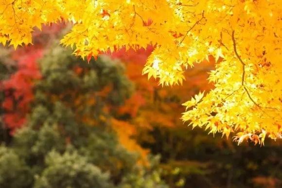 貴船神社の紅葉2017ライトアップや見頃時期と紅葉狩りスポットはココ!