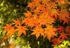 下鴨神社の紅葉2018の見頃時期と紅葉狩りスポットはココ!