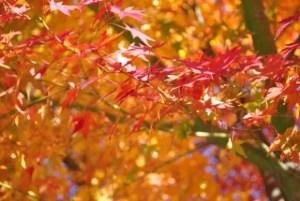 京都の紅葉とライトアップの名所や見頃の時期2016!