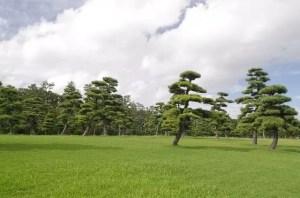 matsunouchi3