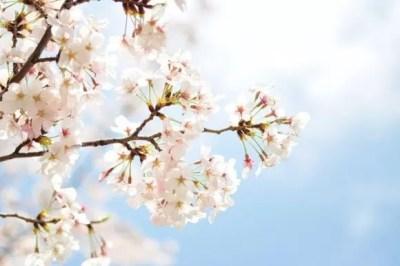 中学の入学祝いプレゼント【男の子・女の子】おススメ5選!