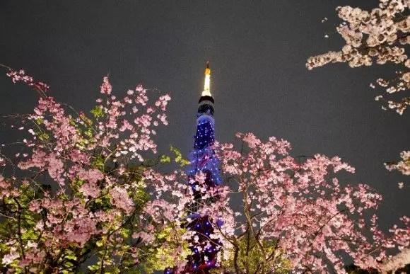 東京の桜・花見の名所や穴場おすすめ10選と開花情報2017!