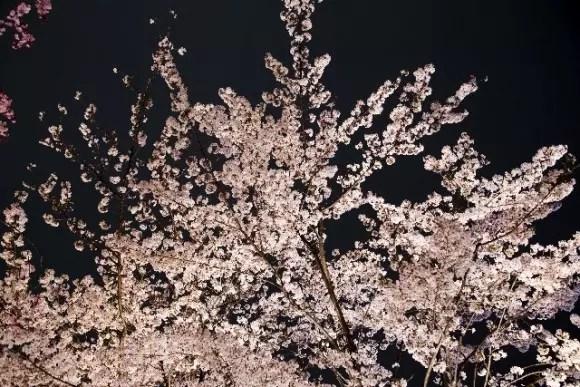 「夜桜」の画像検索結果