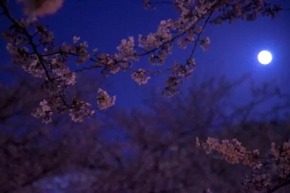 神奈川の夜桜ライトアップの名所や穴場スポット8選!