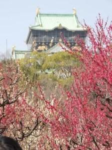 大阪城公園の梅(梅林)2017の見頃の時期や開花状況は?